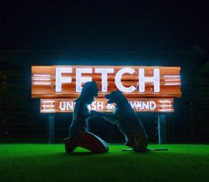 Fetch Dog Park and Ice House - Alpharetta
