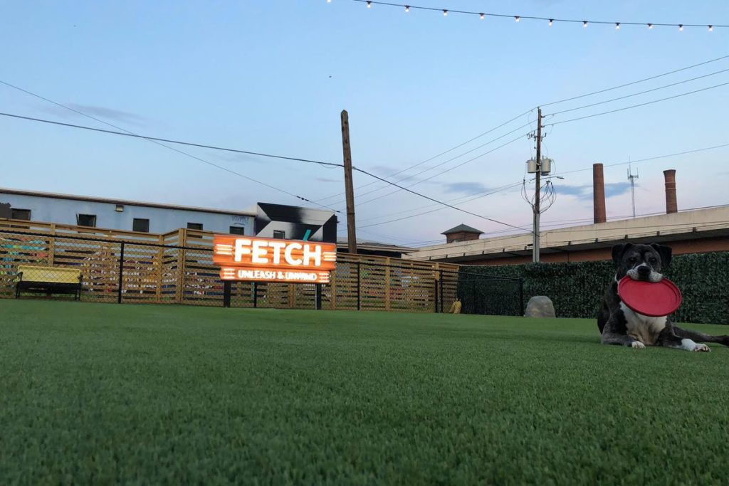 Fetch Atlanta 1